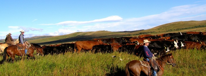 """This was taking along the well named """"Cowboy Trail"""" also known as Highway 22 in southern Alberta"""
