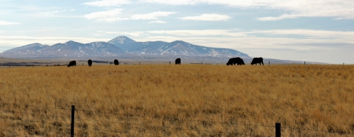 A stones-throw from The Sweet Grass Hill in the State of Montana