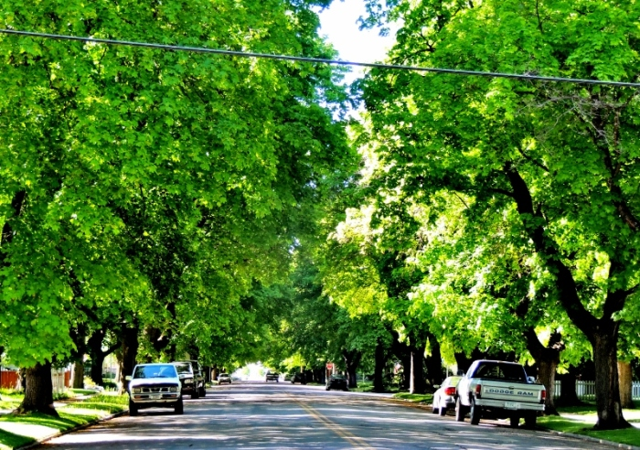 Driving around the streets, I can't believe how green and lush it is